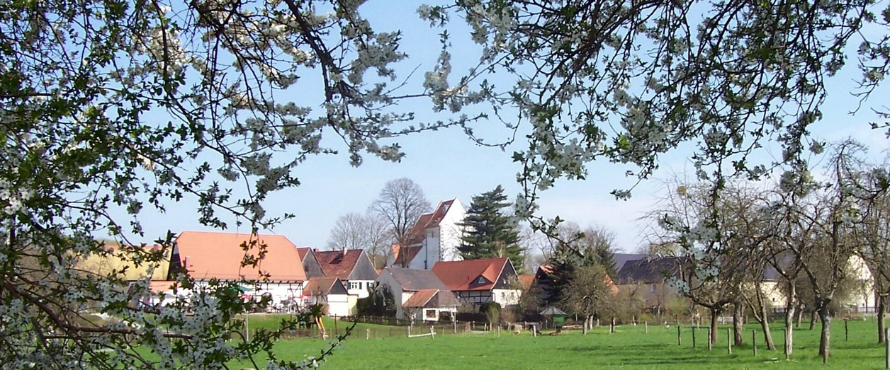 Baumblüte in Höfgen